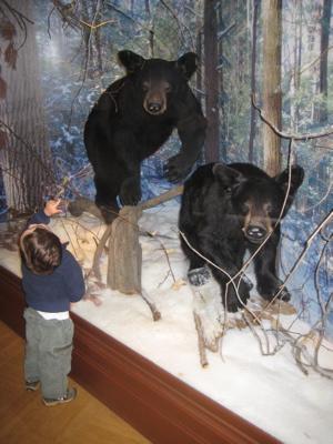 bears_white