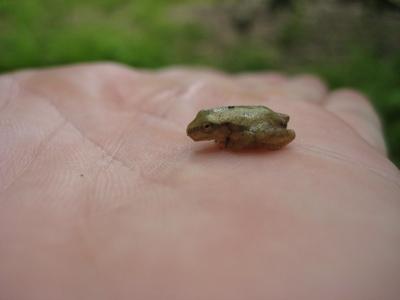 btfrog