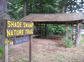 shade-swamp