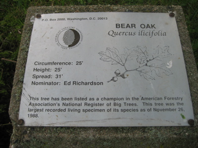 bear-oak