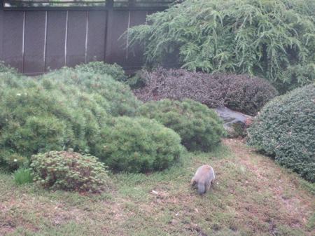 Shoyoan Teien (Japanese Garden)